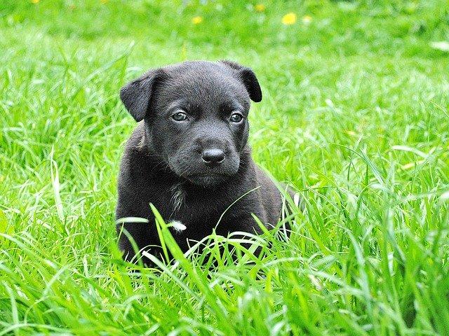 articoli per trasporto animali, cani, gatti