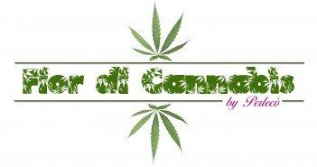 Fior di Cannabis