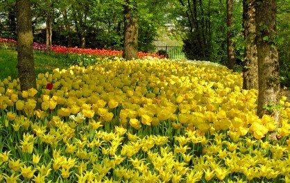Straordinaria fioritura nel parco del castello di Pralormo
