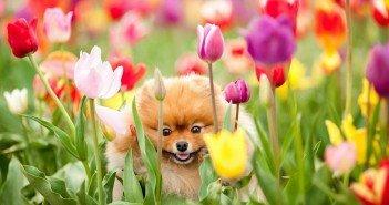 A spasso nel parco di Pralormo tra 75.000 tulipani in fiore