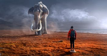 Elefante, natura, ambiente, animale, ecologia