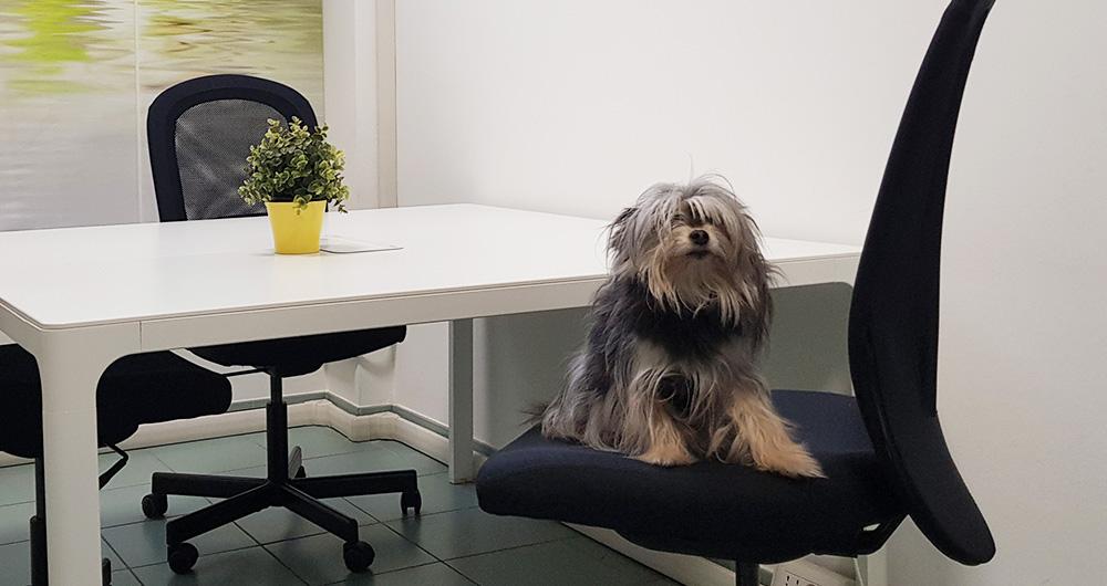 Cani in ufficio? Meno stress, più collaborazione e più produttività