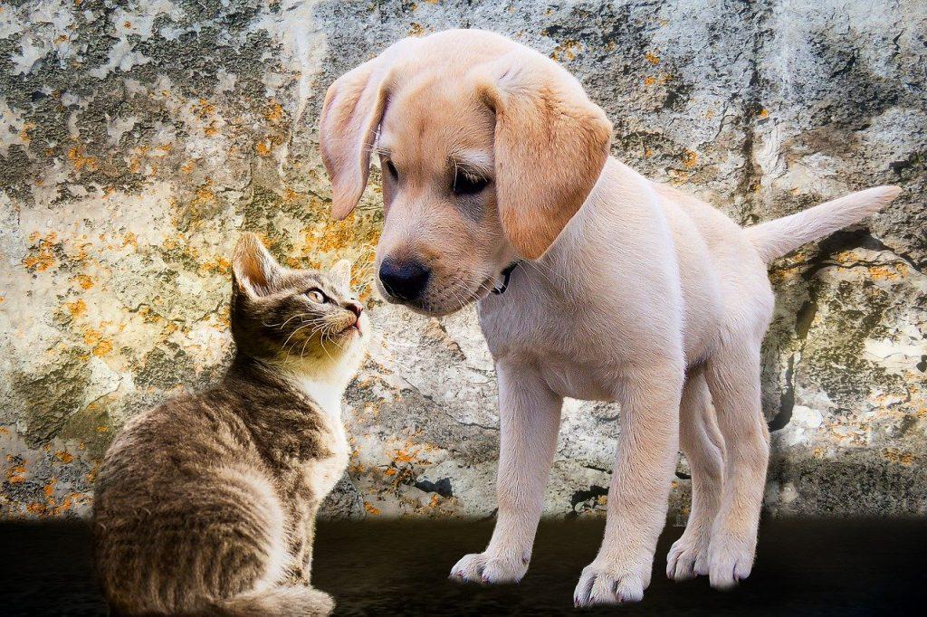 cane, gatto, cani, gatti, pet, animali