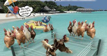 Bulli e atolli, il mondo non è dei polli - Barbara Appiano