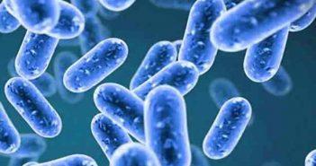 bifidobatteri, intestino, bifidobacterium longum