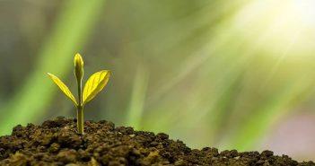 crescita, rinascita, crescere, rinascere, seme, germoglio, pianta nuova, nuovo